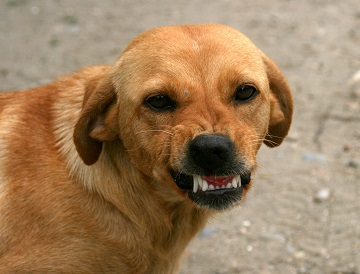 Do Golden Retrievers Smile