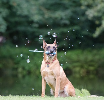 safe bubbles for dogs