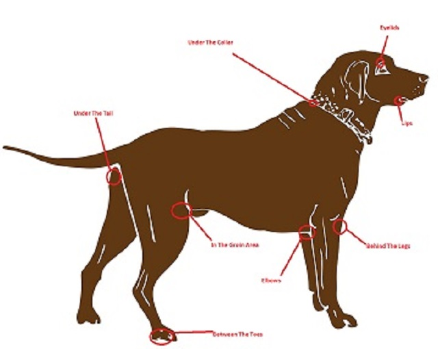 How to remove ticks on dogs