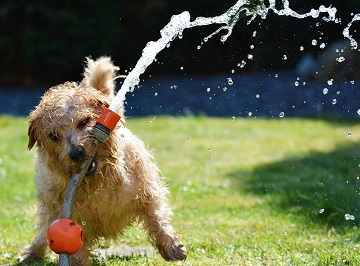 How to keep your dog cool in summer