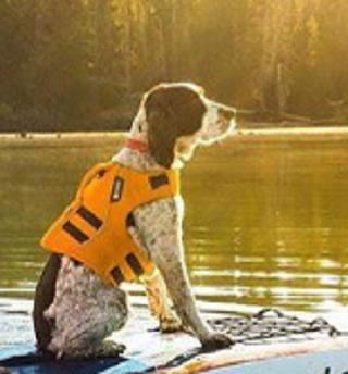 Ruffwear Dog Life Jacket