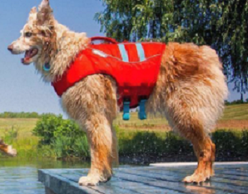 Ruffwear Dog Life Jacket
