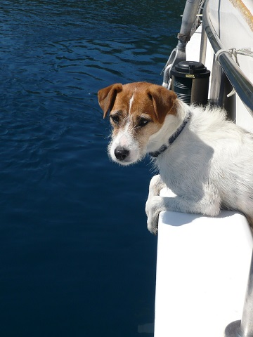 Dog ramps for boats