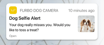 Furbo dog selfie alert