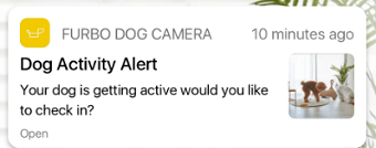 Furbo Dog Activity Alert