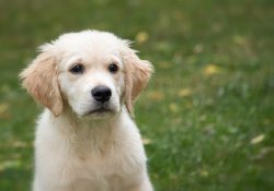Checklist for a new puppy
