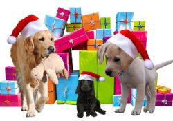 Top 10 Christmas presents for dogs