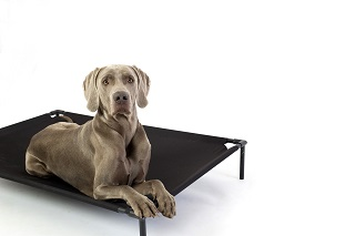 Best elevated dog beds for large dogs