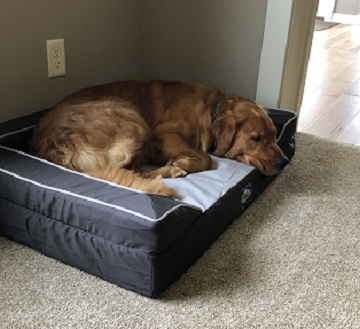 Does My Dog Need A Dog Bed